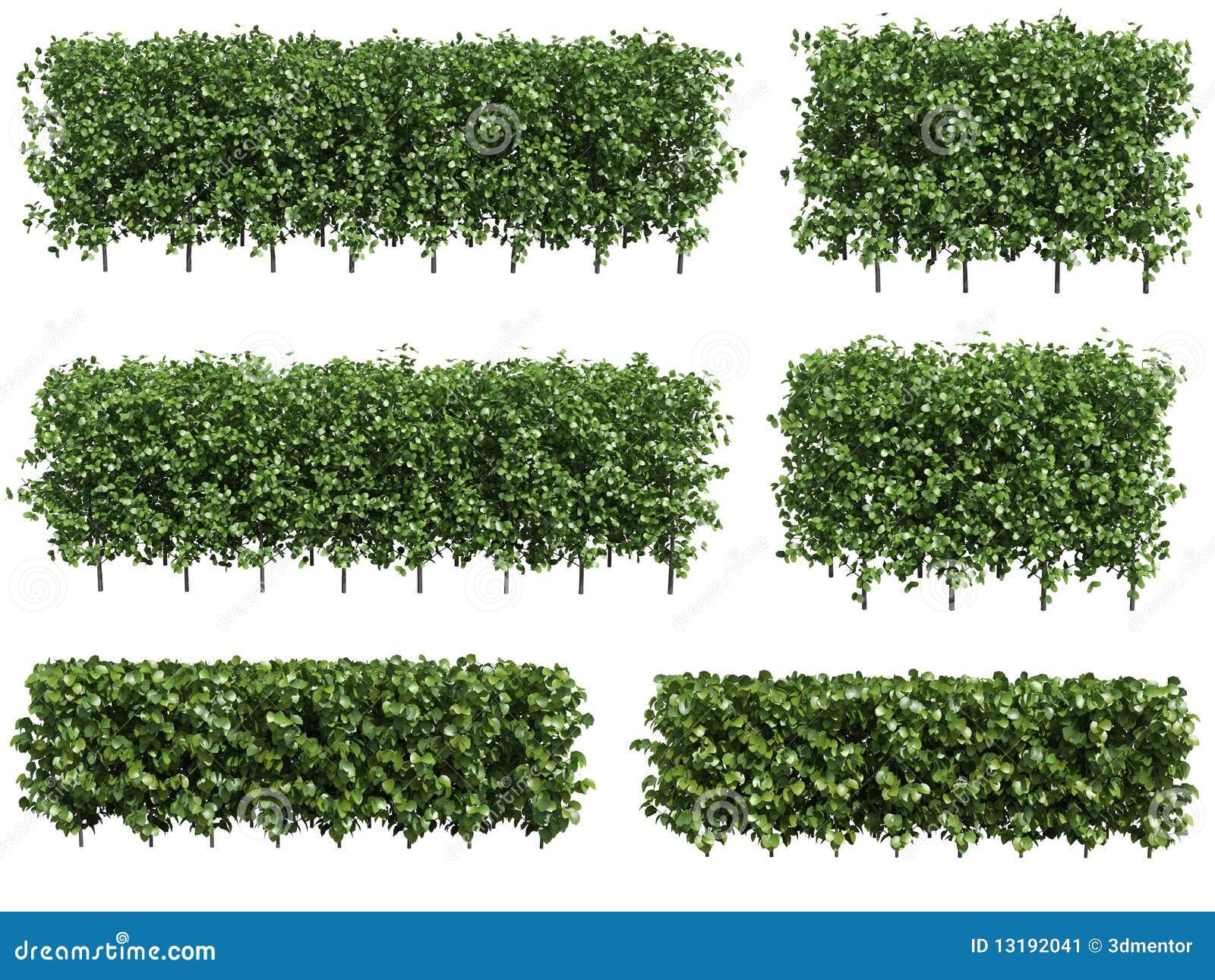 green hedge stock image image 13192041. Black Bedroom Furniture Sets. Home Design Ideas