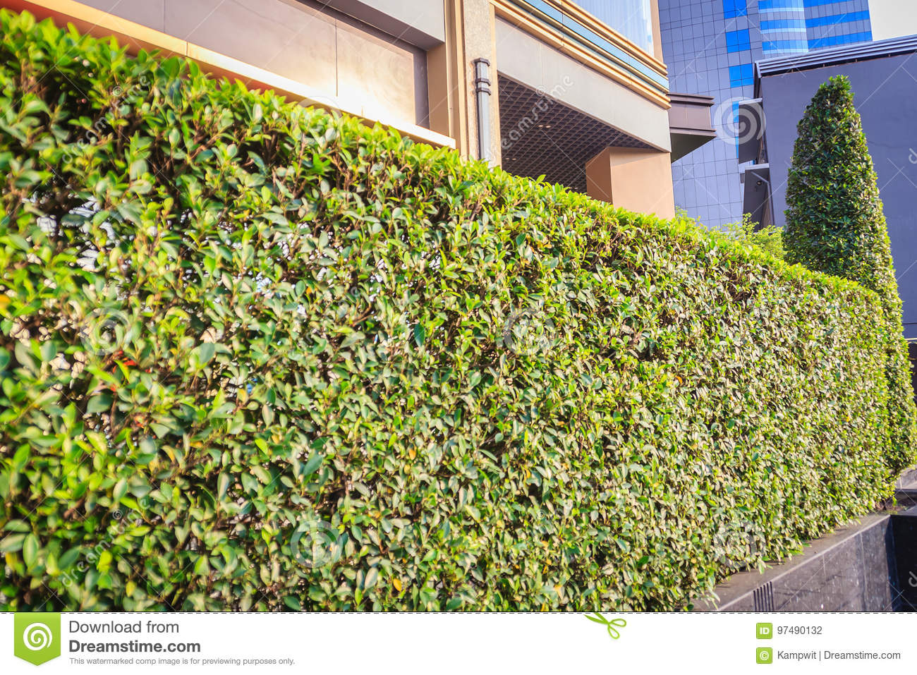 green hedge fence wall in front of the office stock photo image of