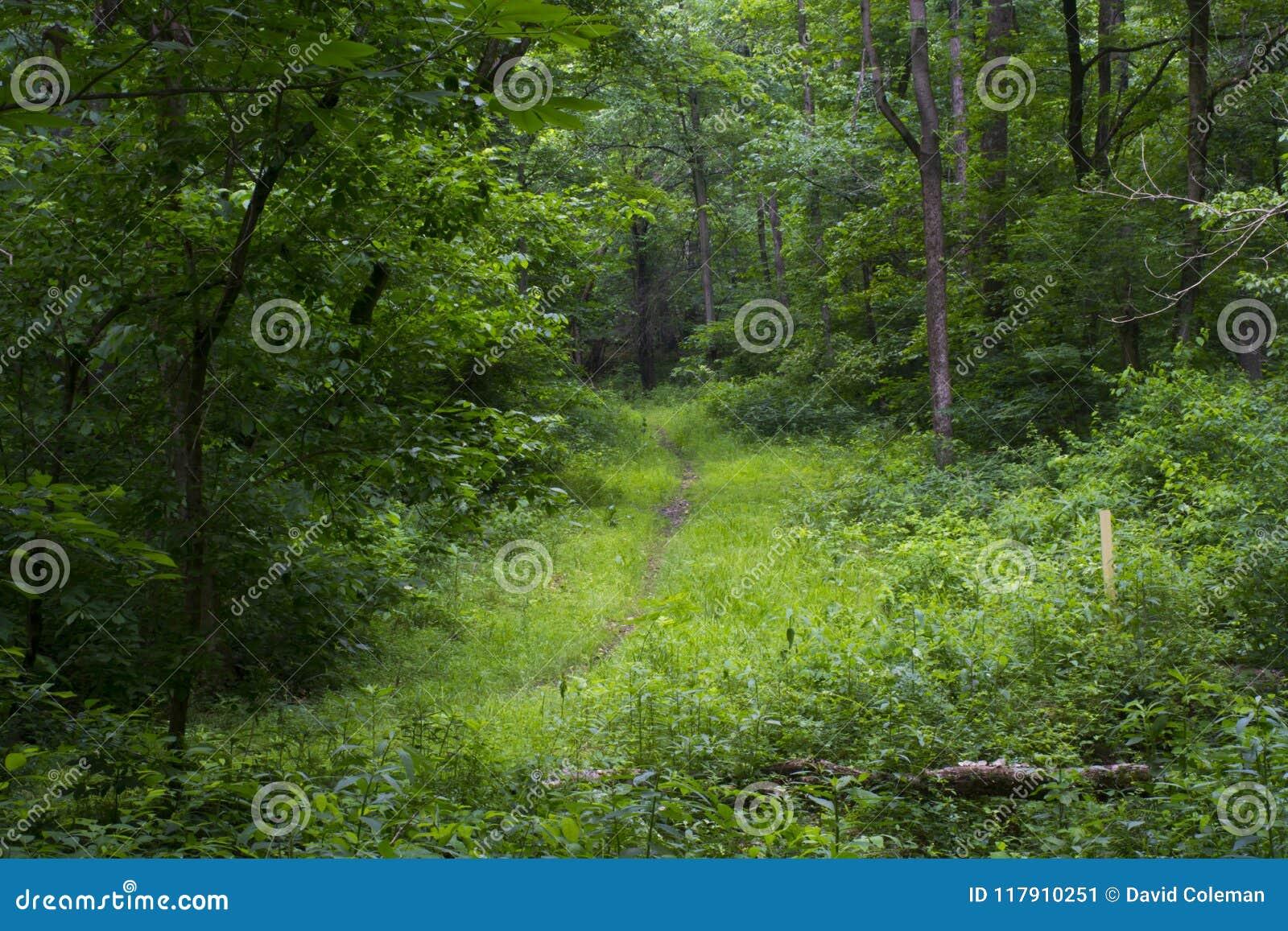 Hiking path through dense forest