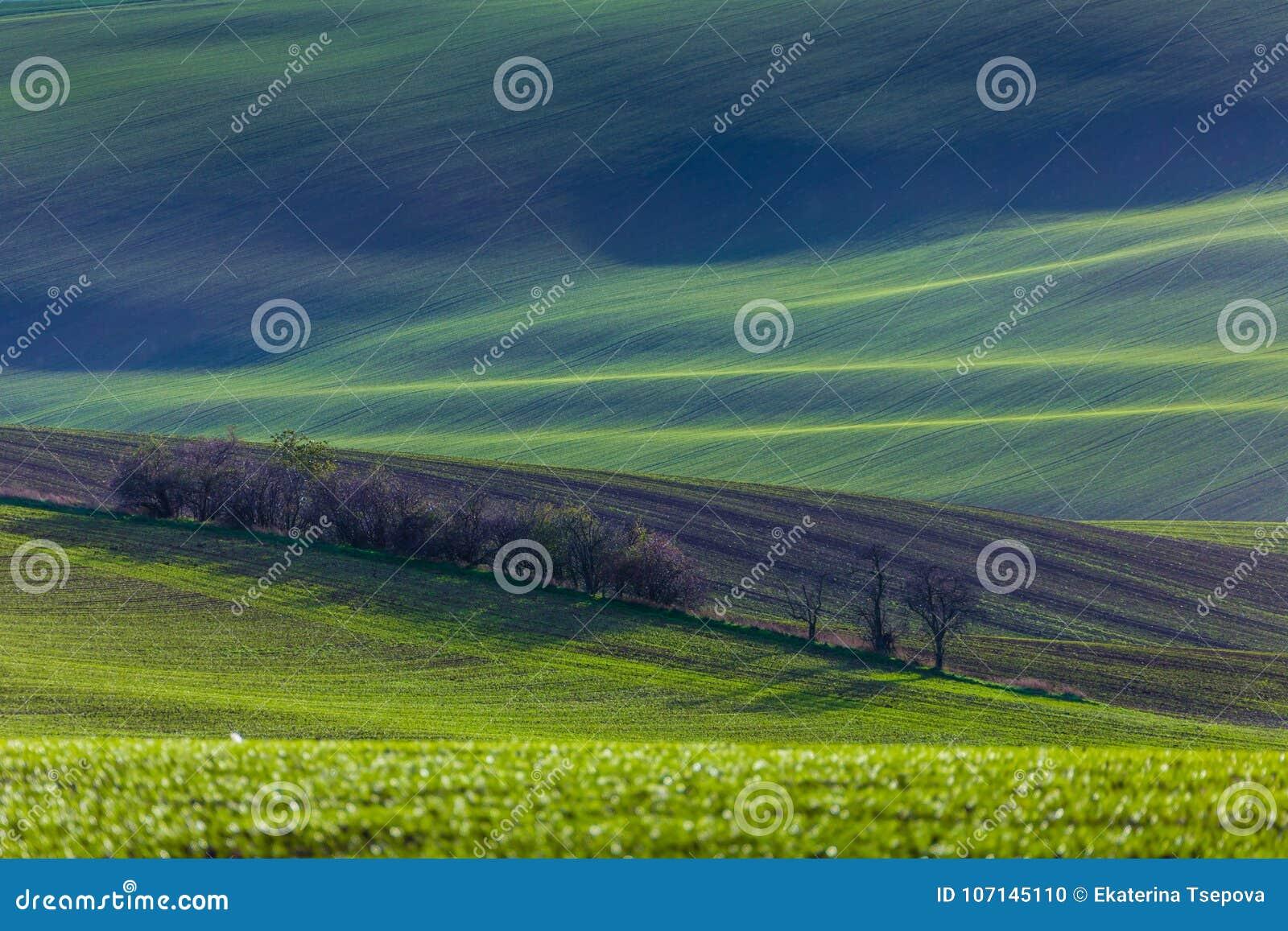 Green hills of Moravia