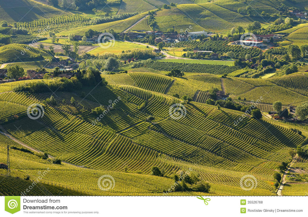 Green hills and vineyards of piedmont in early morning in for Green italy