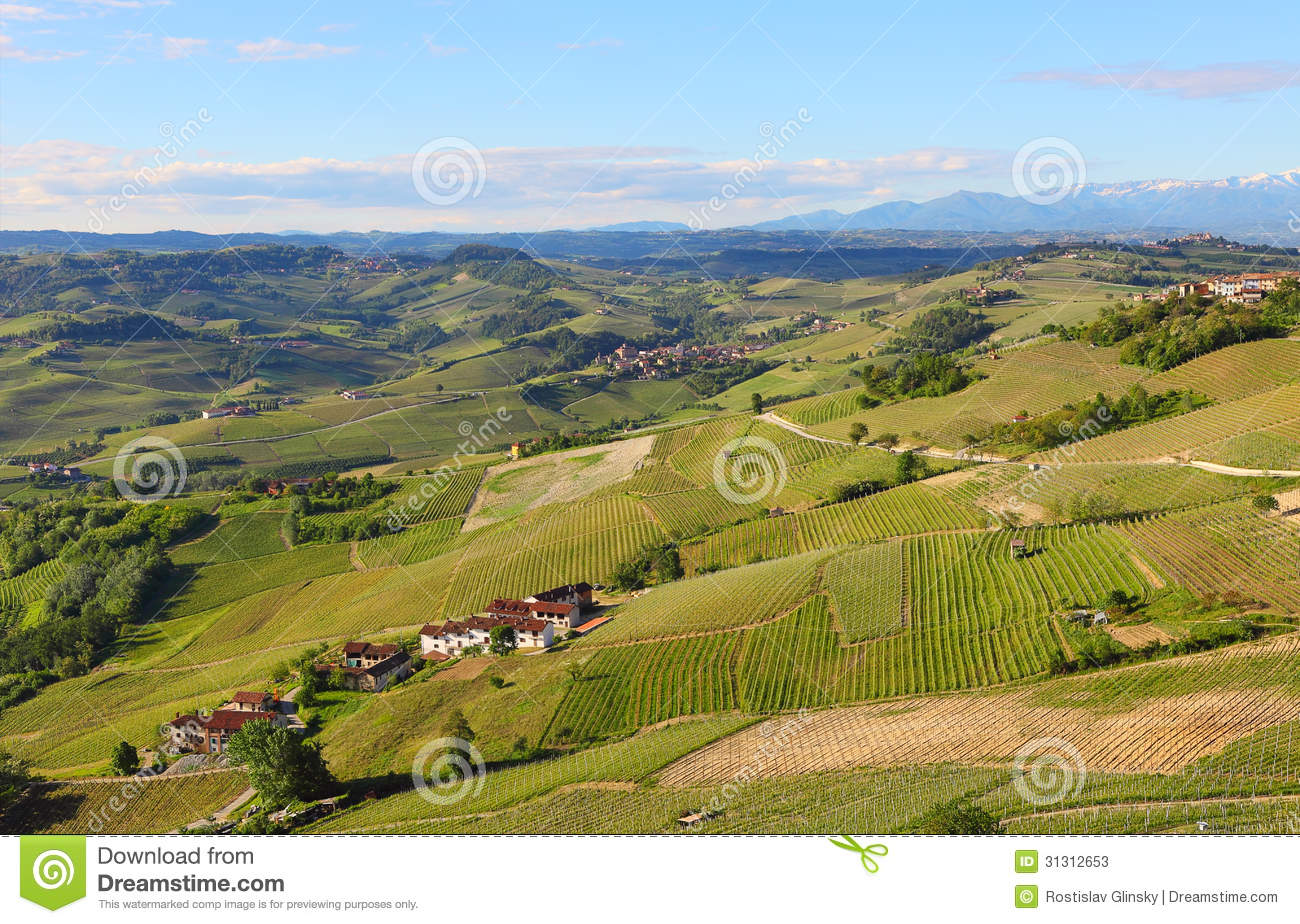Green vineyards on the hills of piedmont italy royalty for Green italy