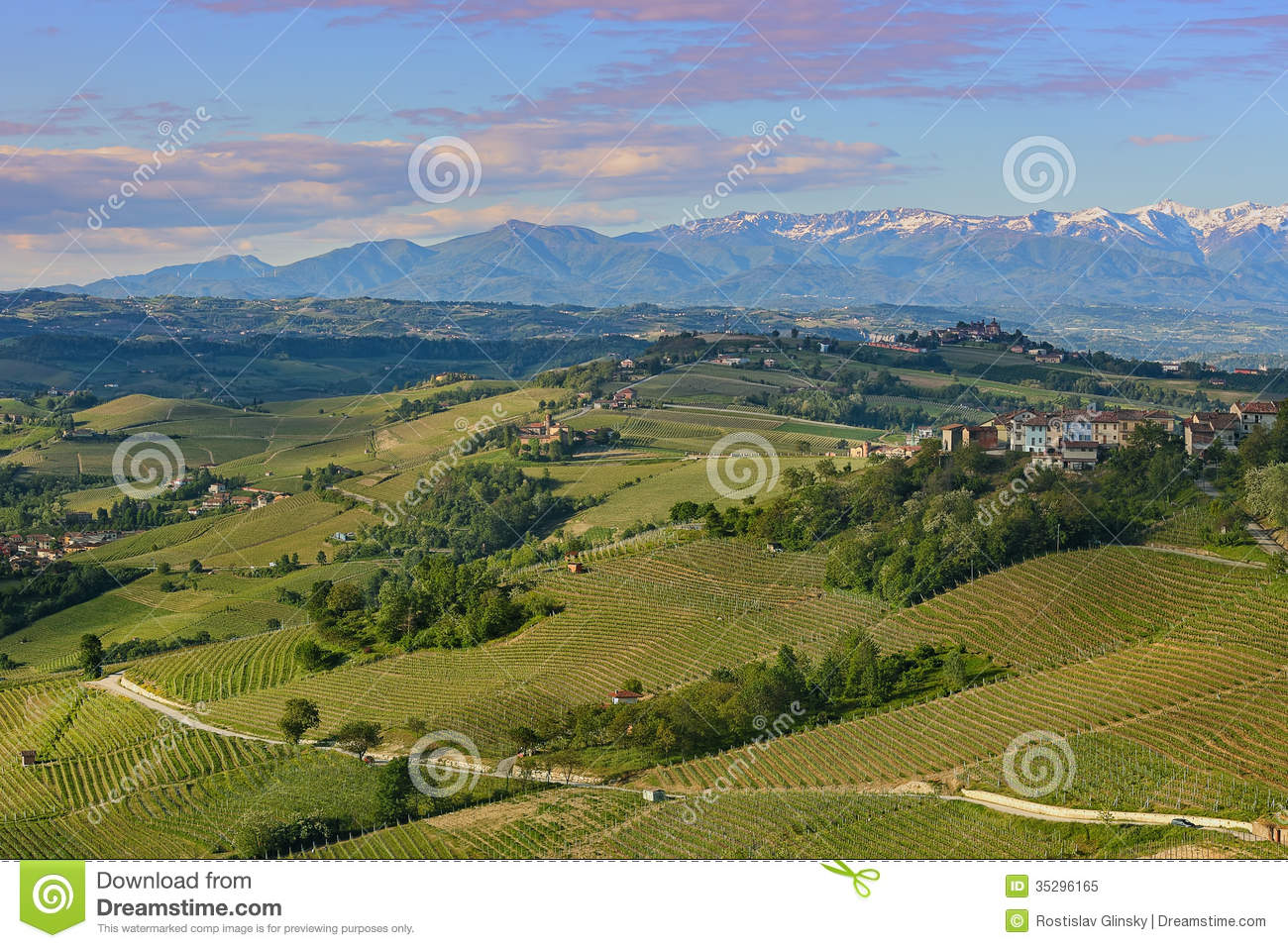 Green hills and vineyards of piedmont italy royalty free for Green italy