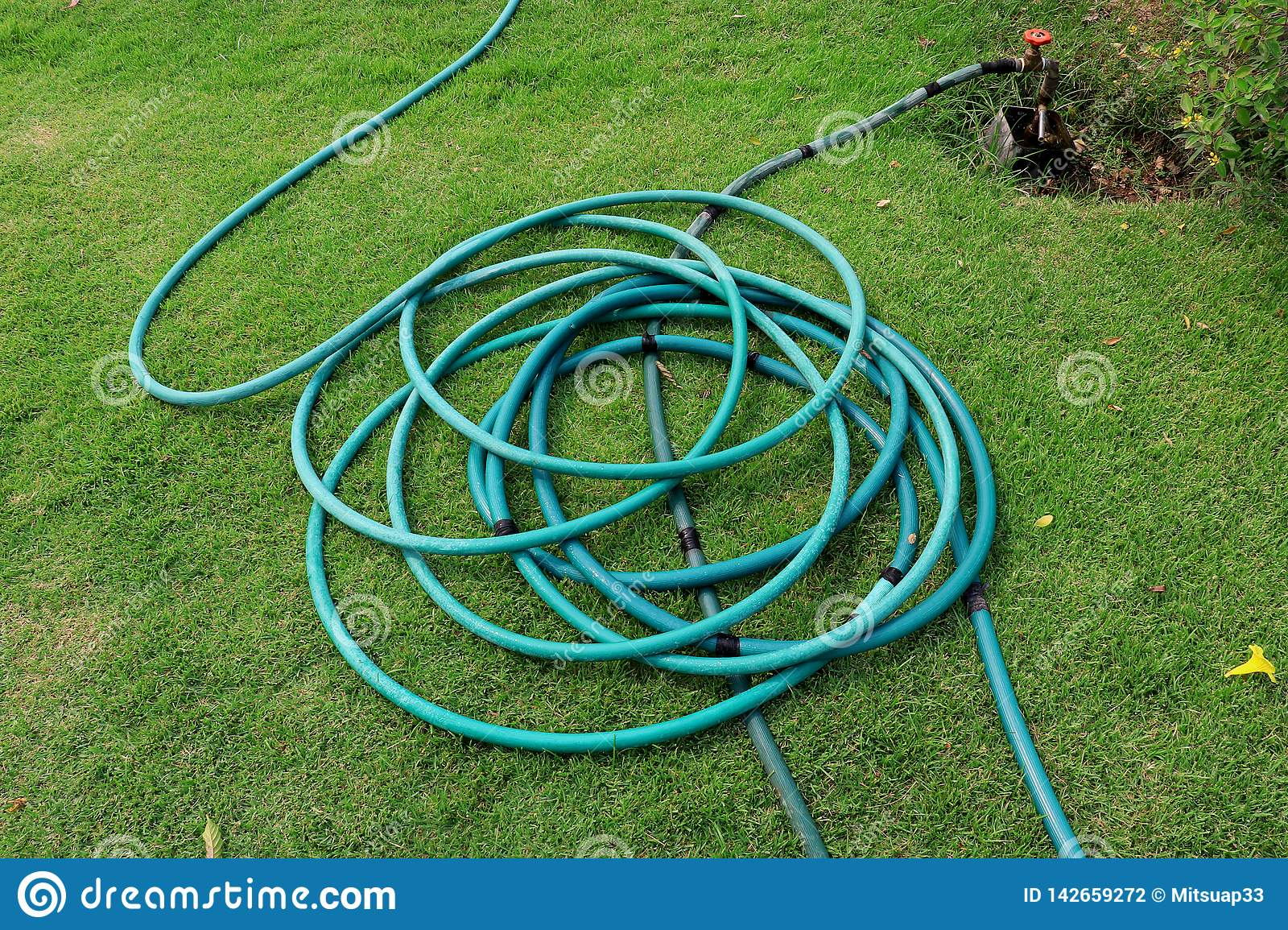 A green hose lying on the grassy ground, A close up image of a garden hose, Rubber tube for watering plants in the garden