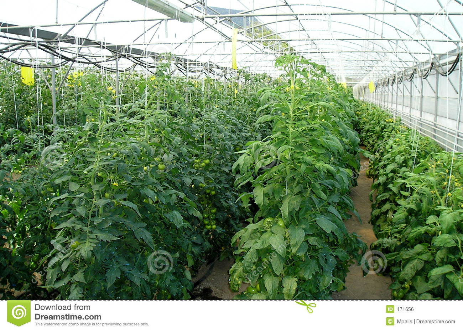 Greenhouse for vegetables