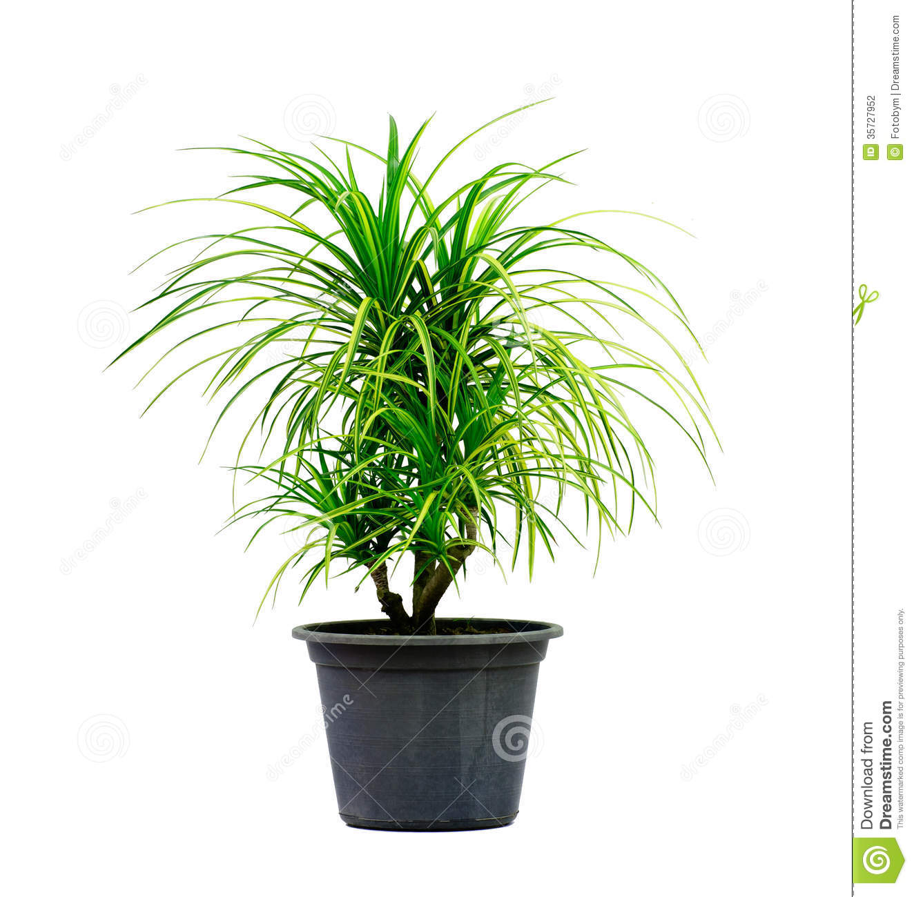 Green House Plant Isolated On White Stock Photography ...