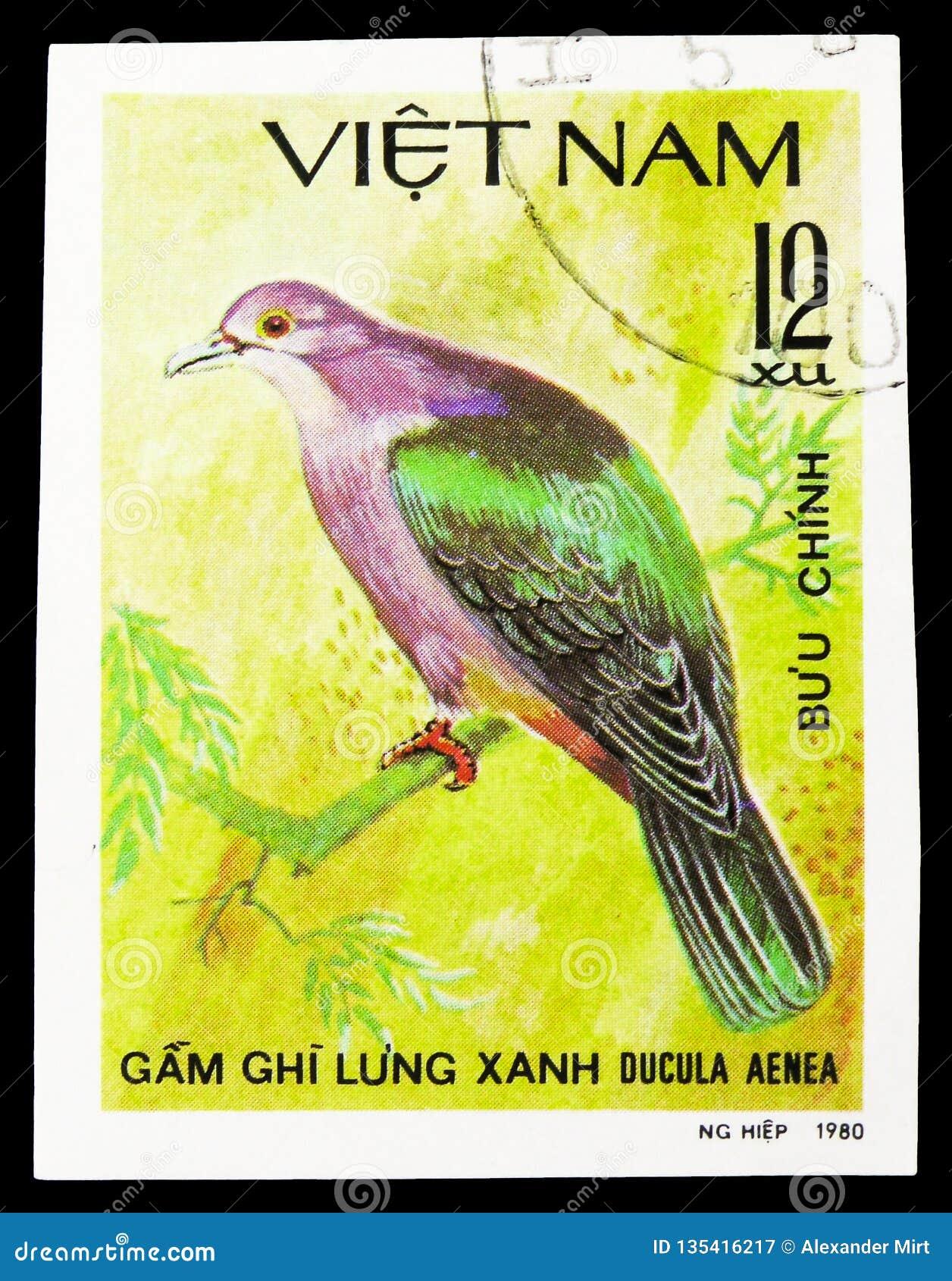 Green Imperial-pigeon (Ducula aenea), Doves serie, circa 1981