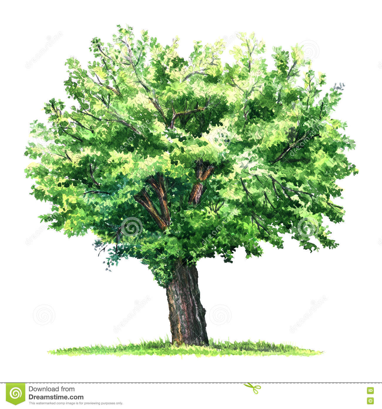 How To Draw A Mulberry Tree