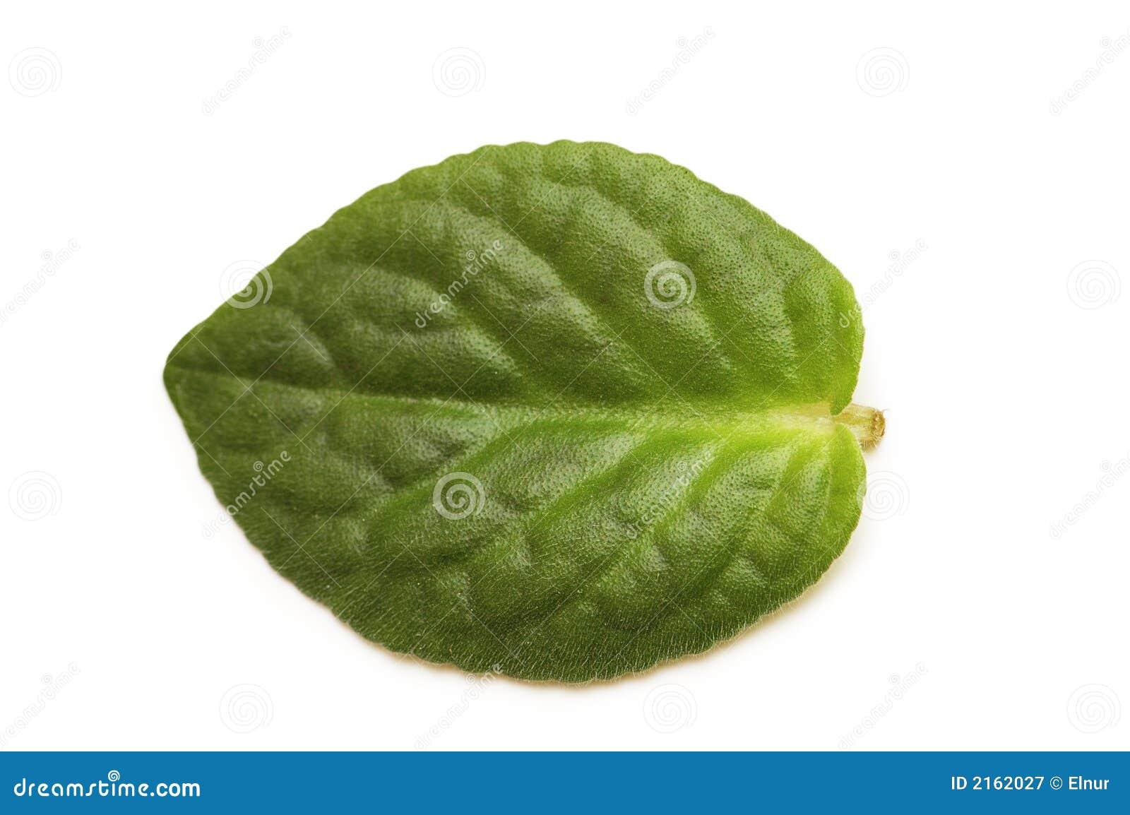 Green isolerad leafwh