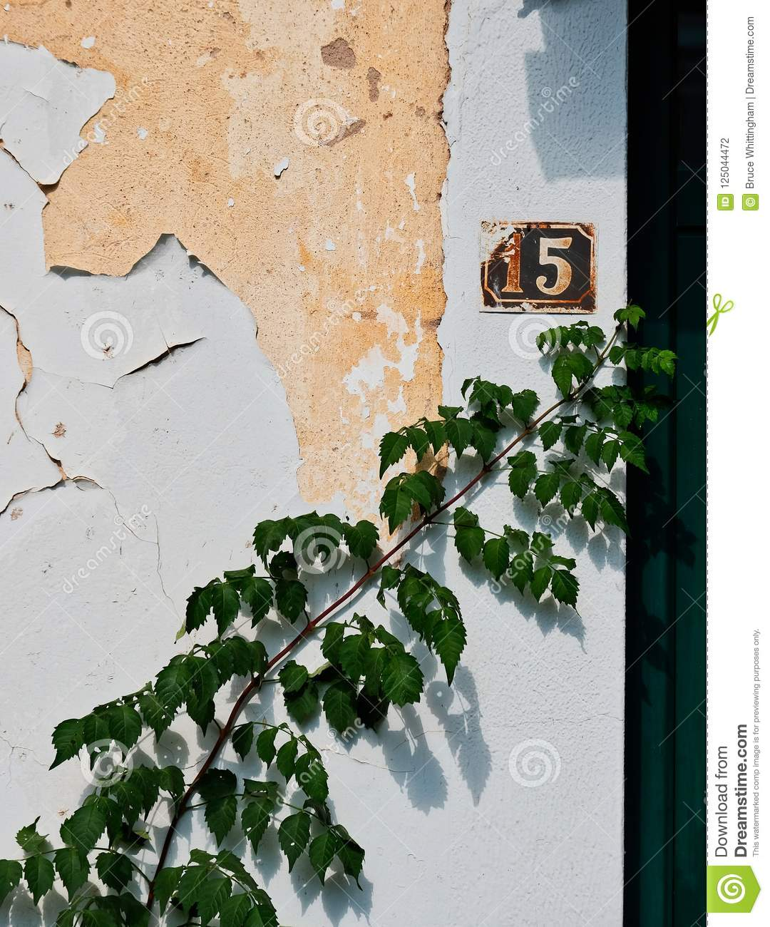 Green Ivy Plant Growing on Peeling White Stucco Wall, Greece