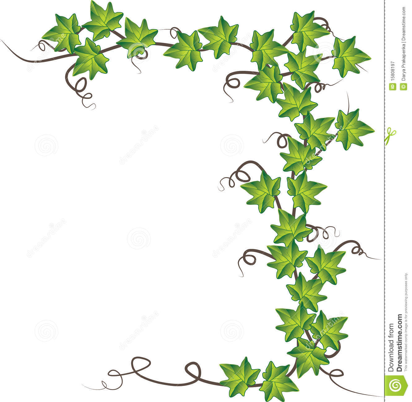 Green Ivy Vector Illustration Royalty Free Stock Photography Image 15808197