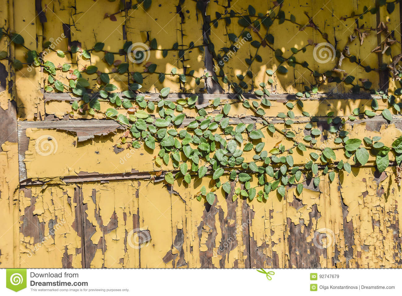 Green ivy on a yellow wall