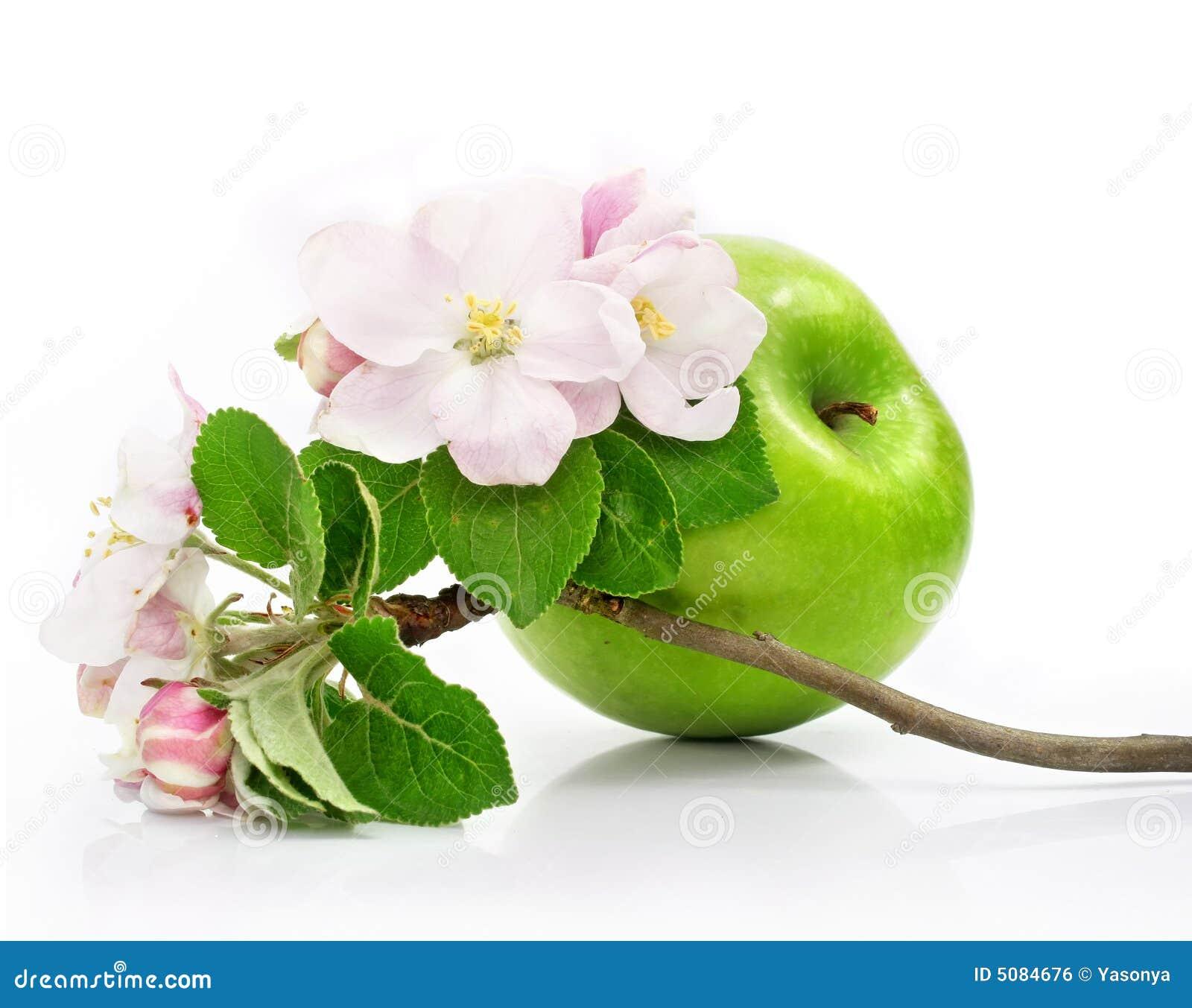 Green jabłczana odizolować różowy kwiat owoców