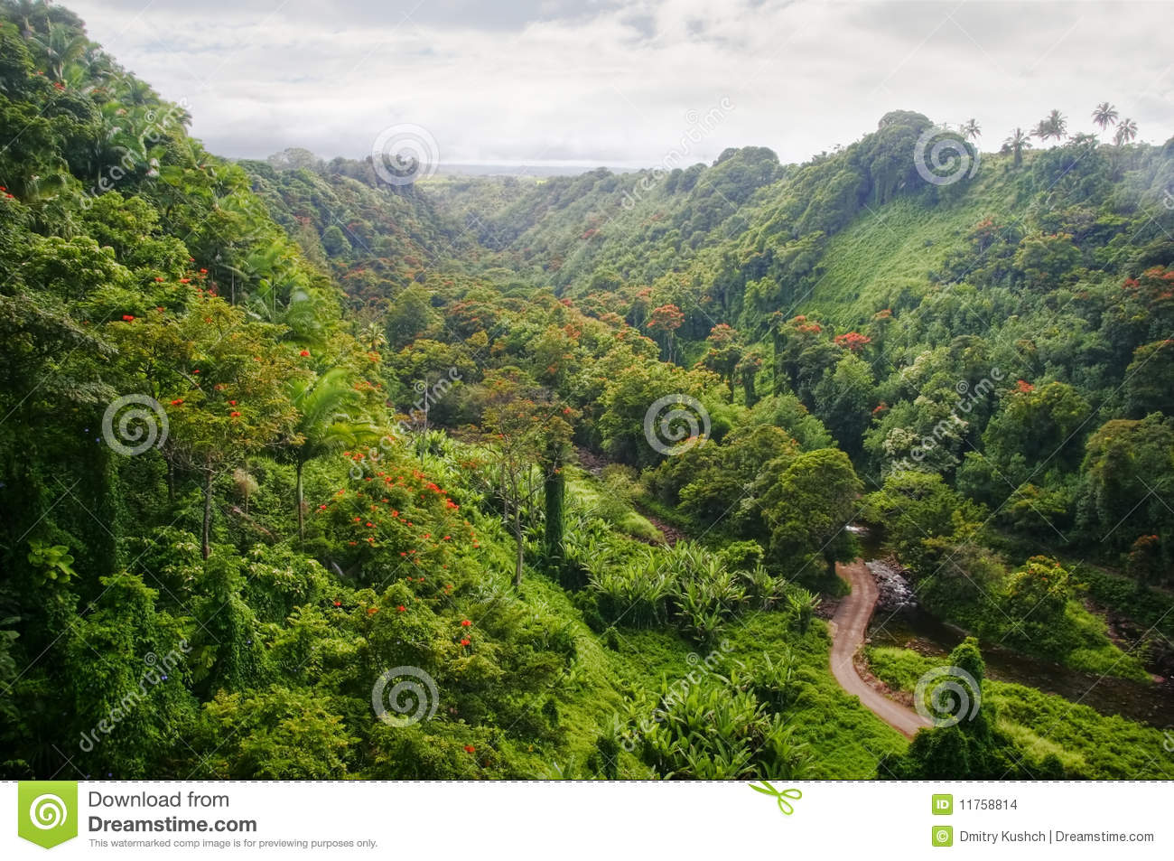 Green Jungle Of Hawaii Stock Images - Image: 11758814