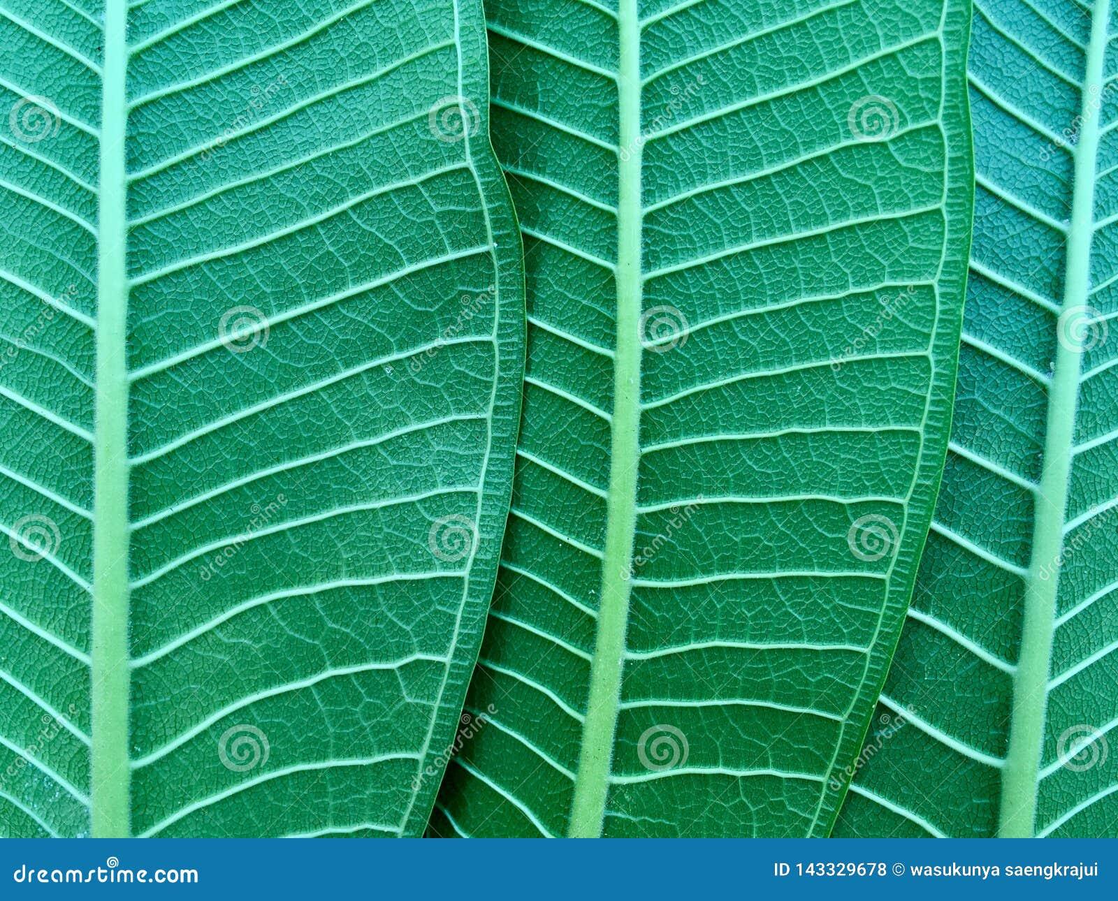 Green låter vara naturligt