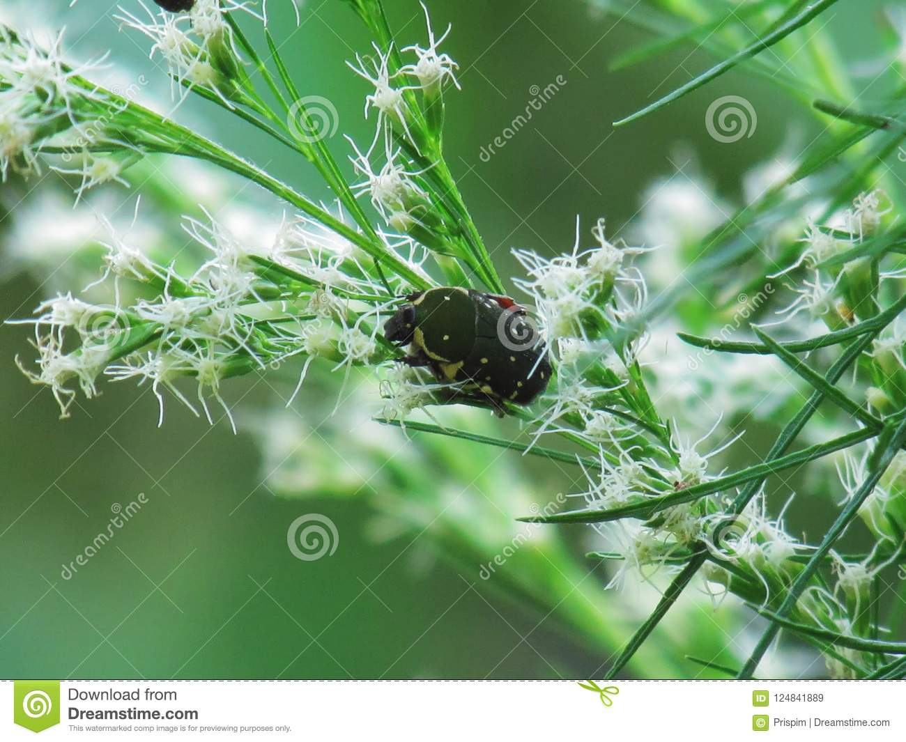 Green Ladybug On Small White Flower Bouquet With Sunshines Morni ...