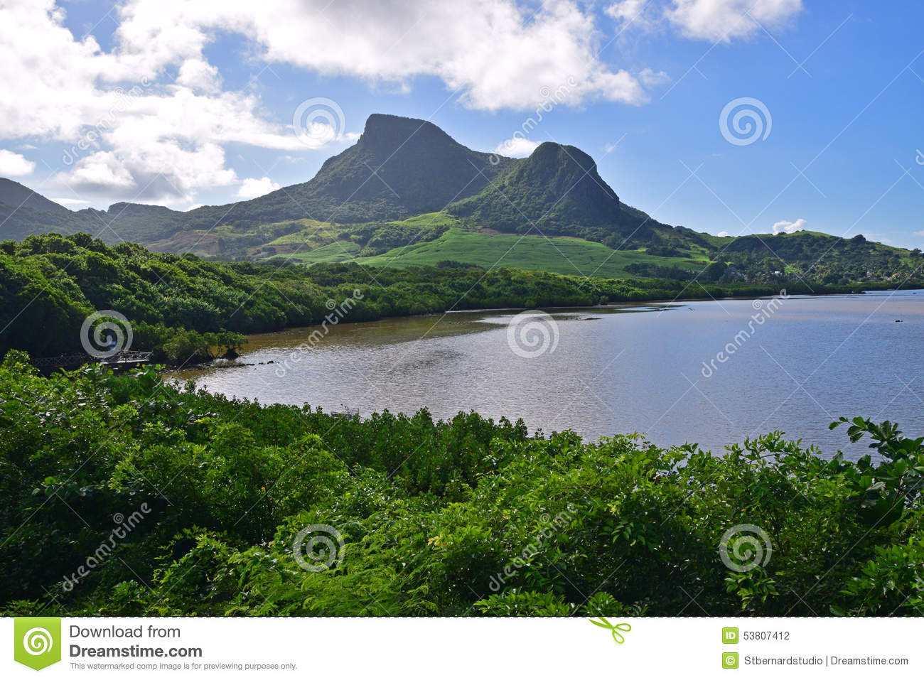 Green landscape with coastal mangroves water and lion for Nearby landscapers