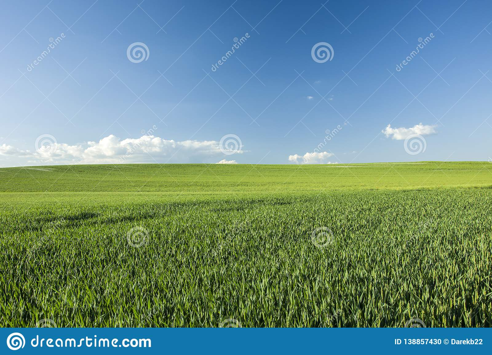 Green large hillside field and blue sky
