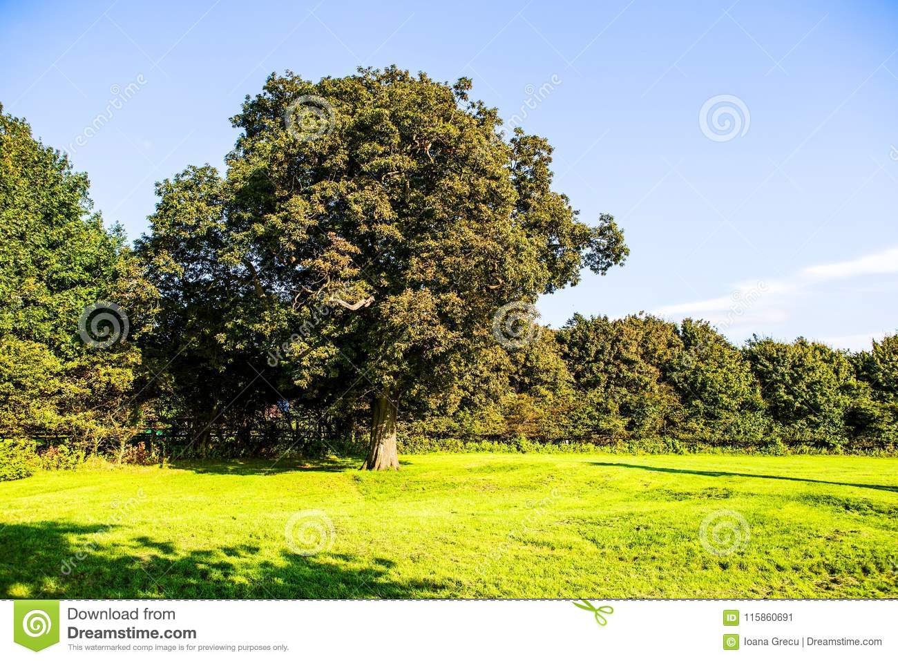 Green lawn and old trees at Margam country park grounds, Whales