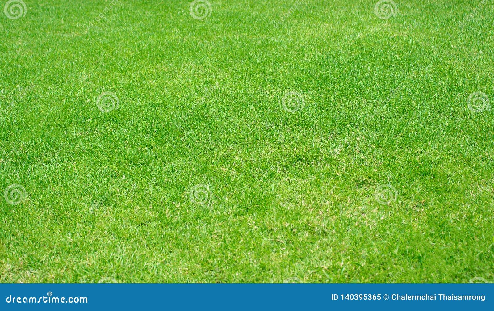 Green Lawn Pattern Textured Background Fresh Green Manicured