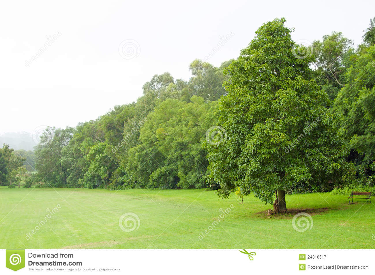 Green lawn and trees