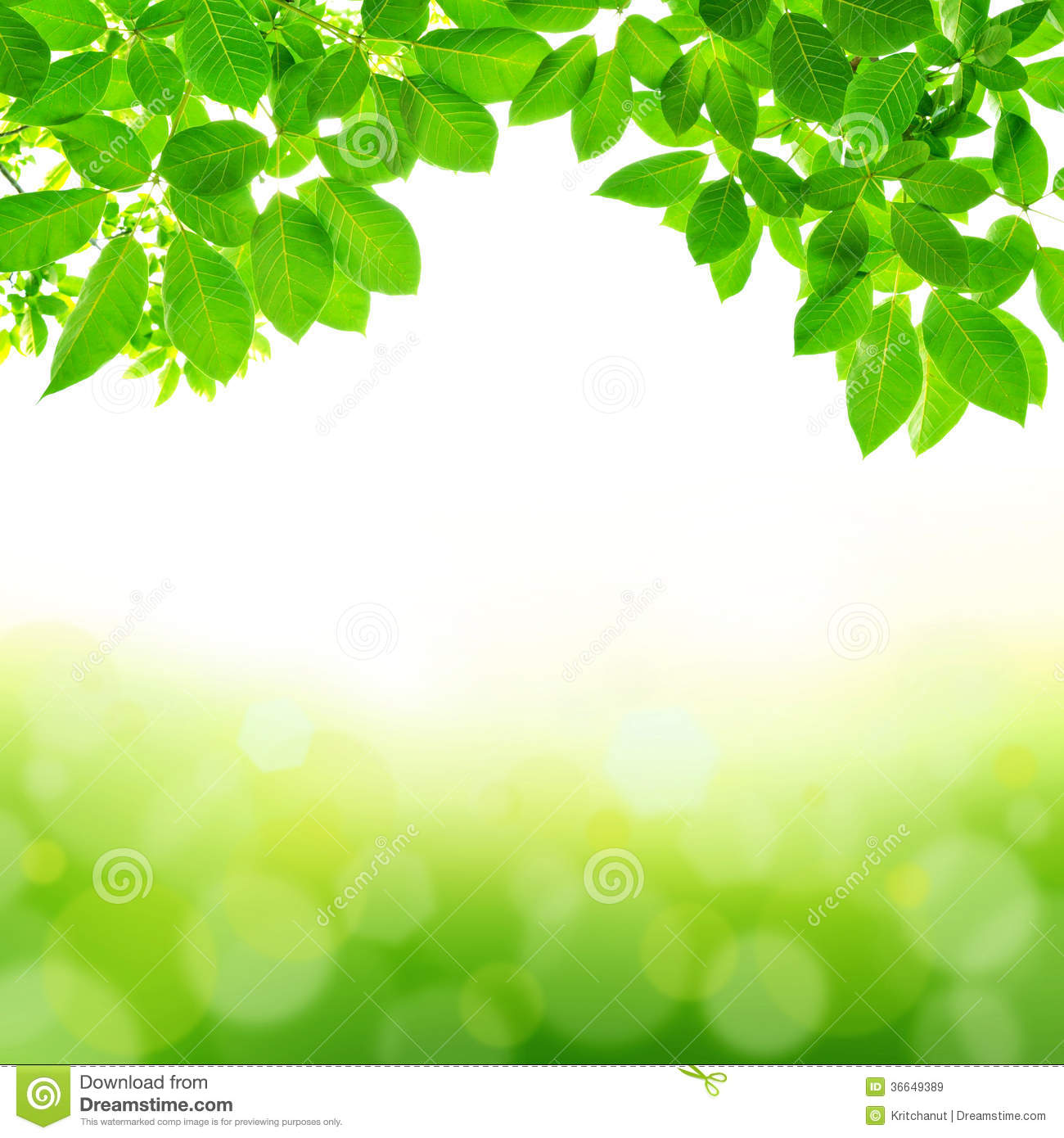 Green Leaf Abstract Background Stock Image Image Of