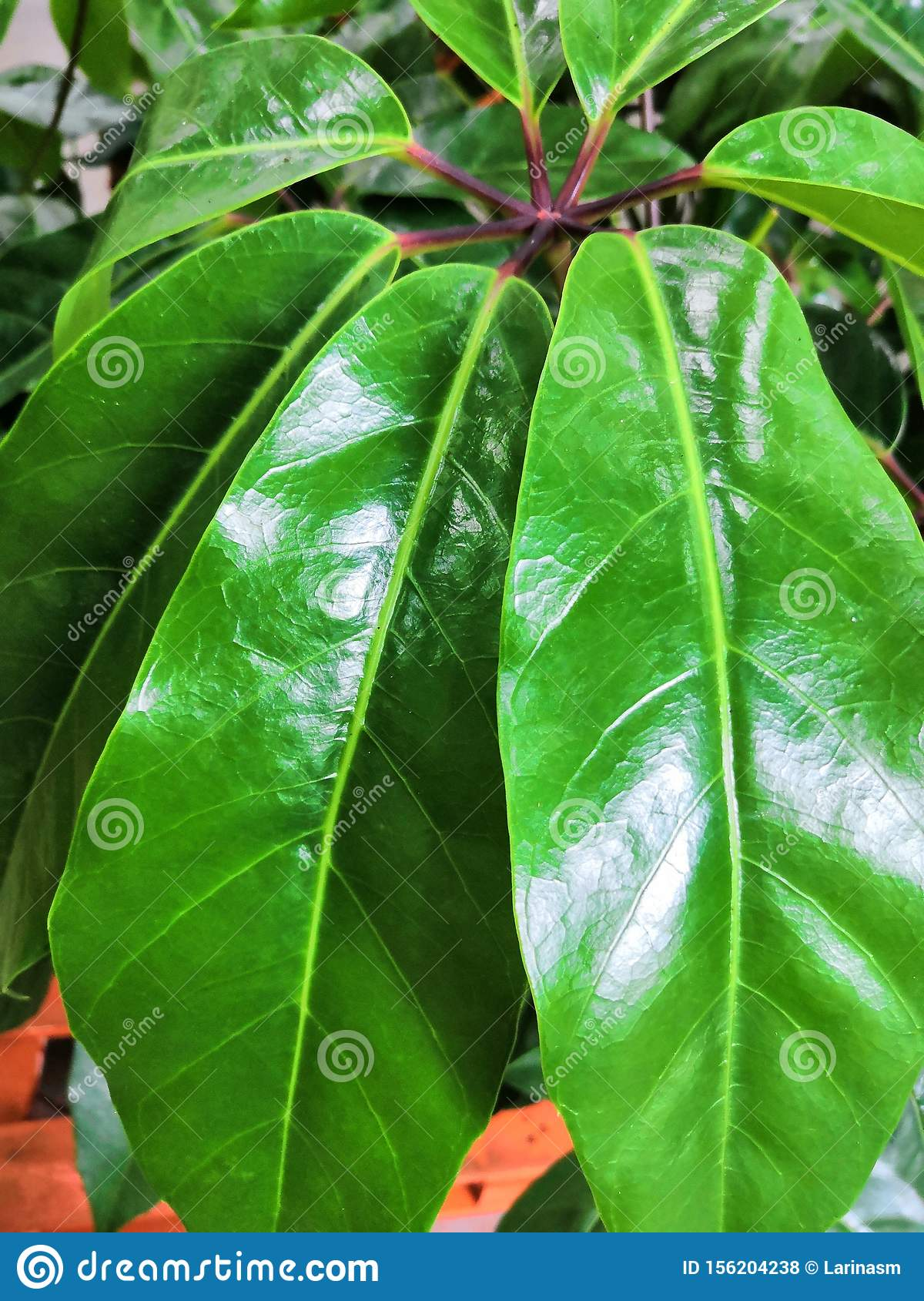 Green Leaf Background In Tropical Forest For Graphic Design