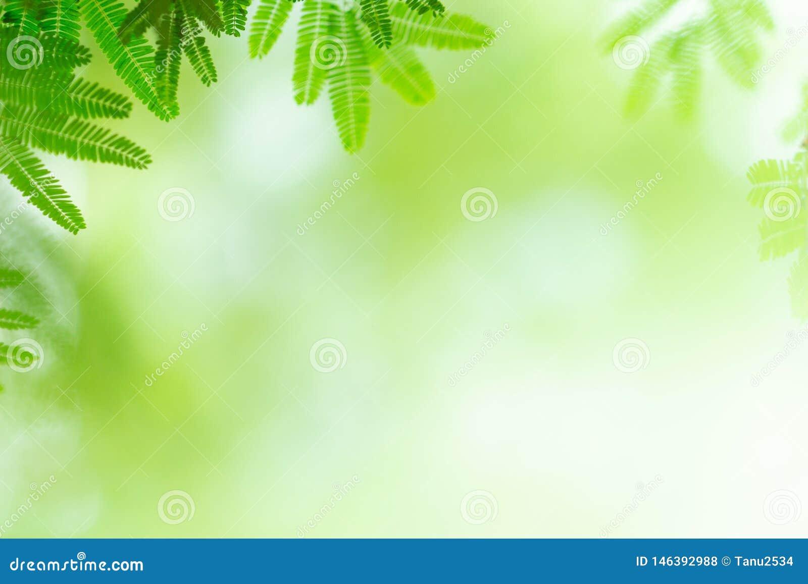Green leaf on blurred greenery background. Beautiful leaf texture in nature.