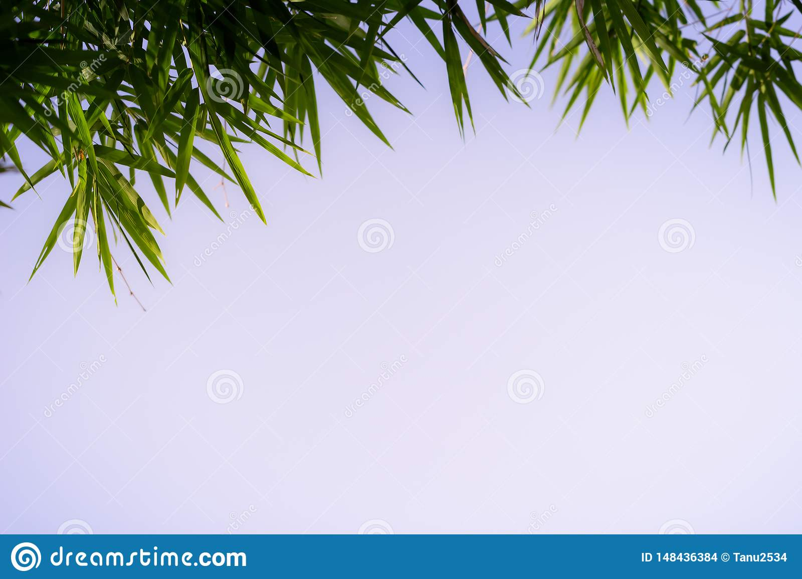 Green leaf on blurred greenery background. Beautiful leaf texture in nature. Natural background.