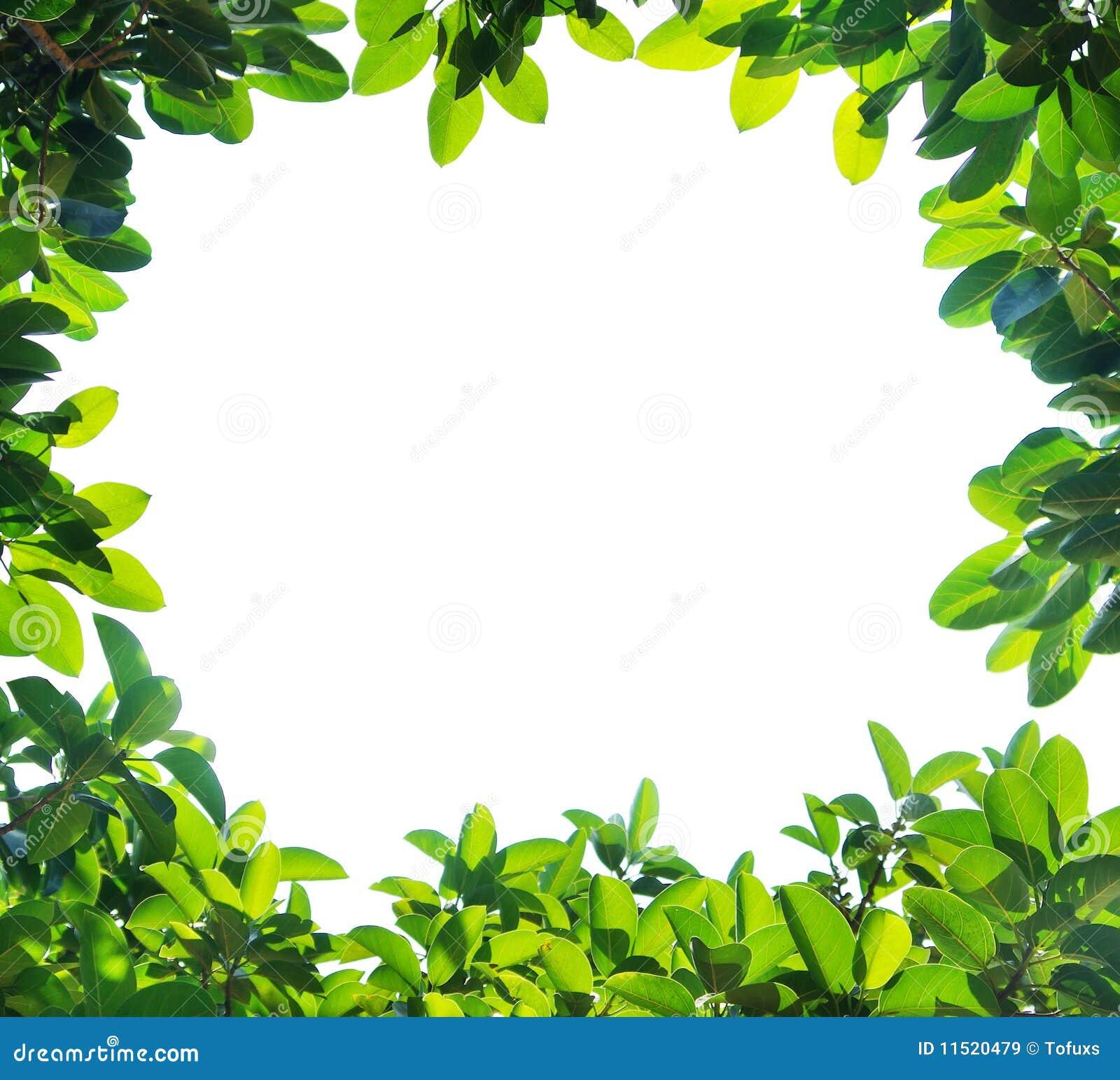 Green leaf border,Isolated on white background.