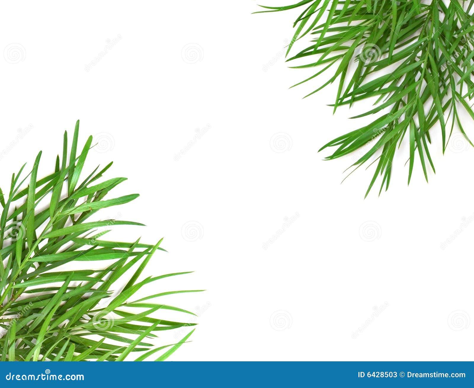 Stock Photos: Green leaf border. Image: 6428503