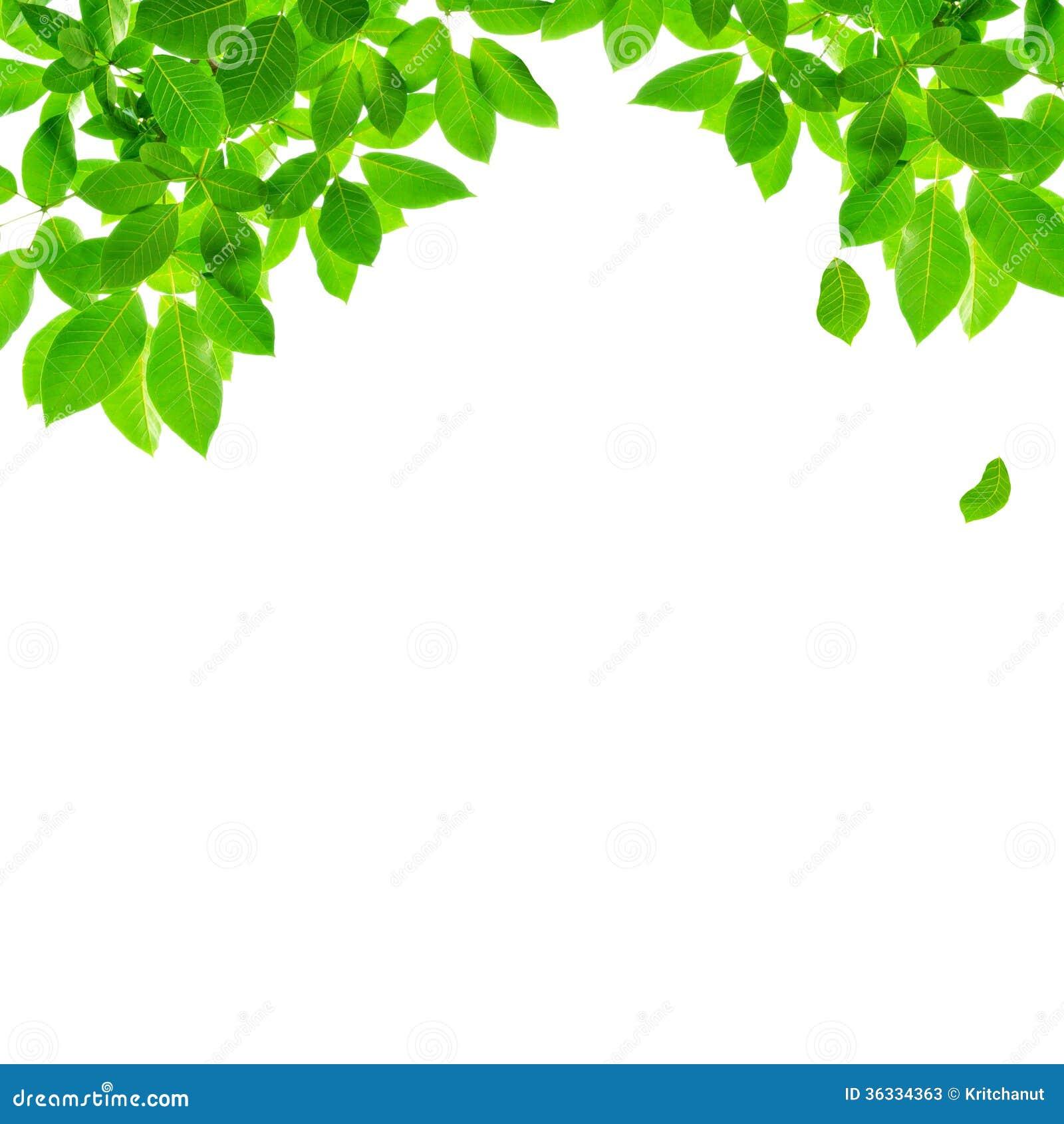 Green Leaf Border Design Stock Image Image Of Spring