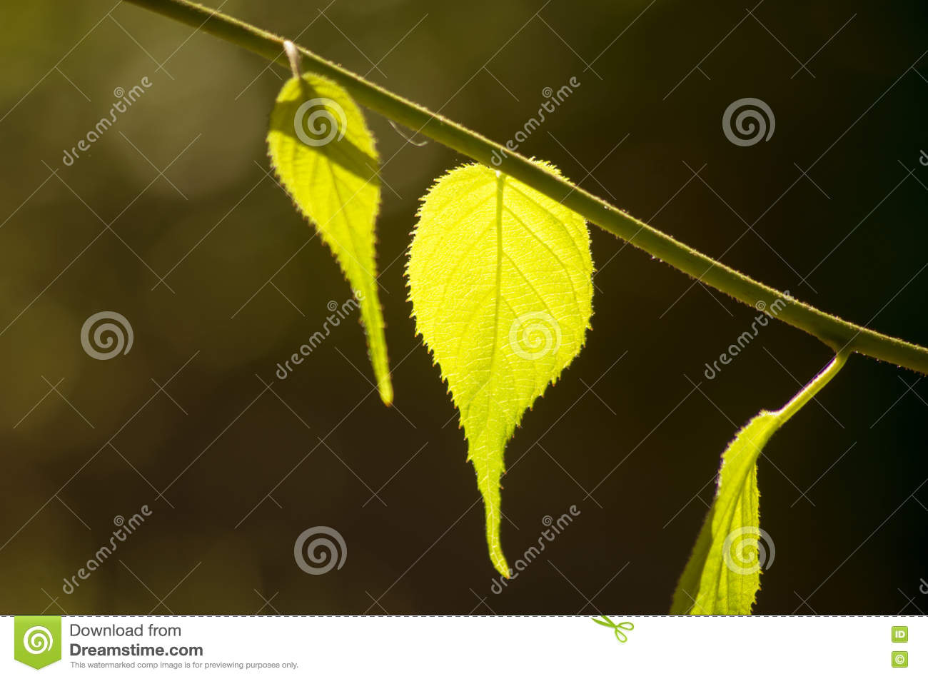 Green leaf on a branch