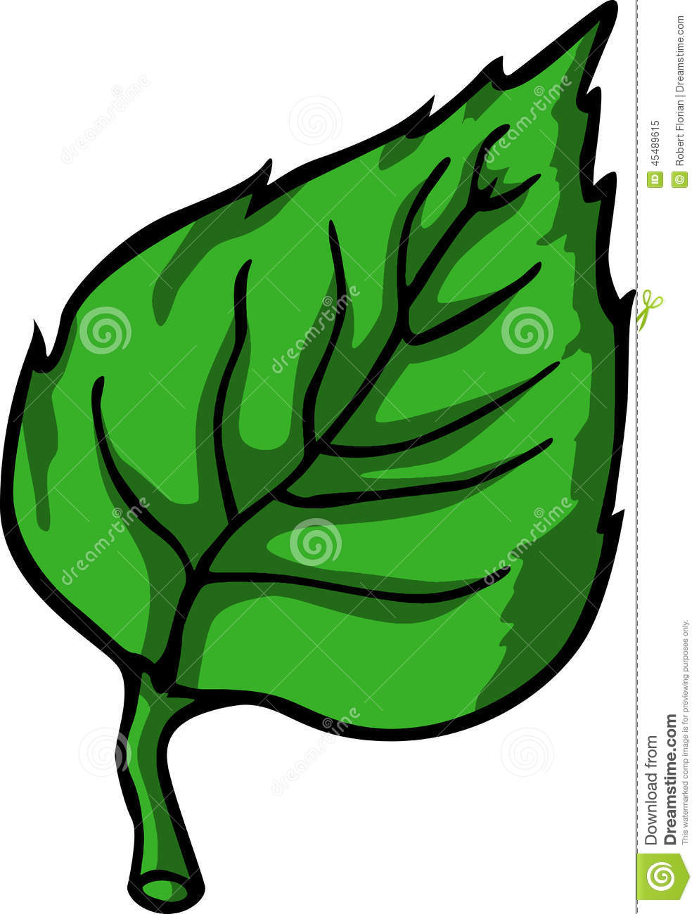 Green Leaf Stock Vector Image 45489615