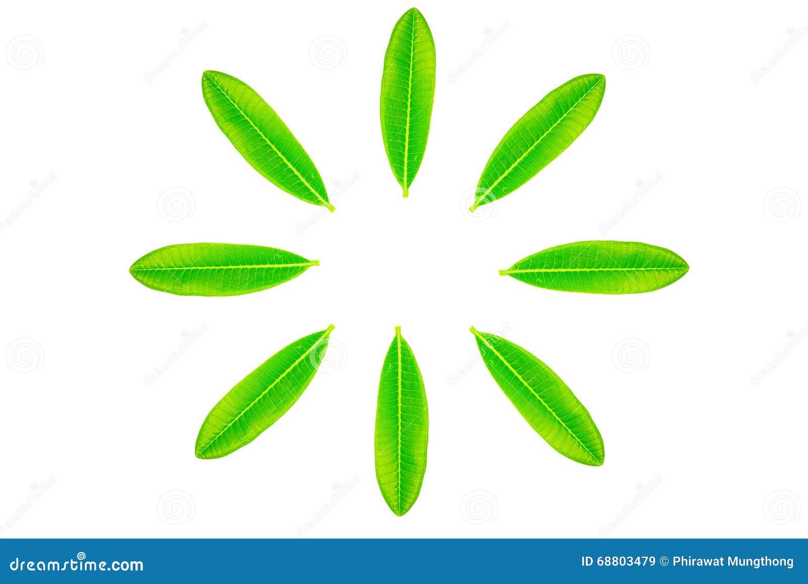 life circle leaf купить