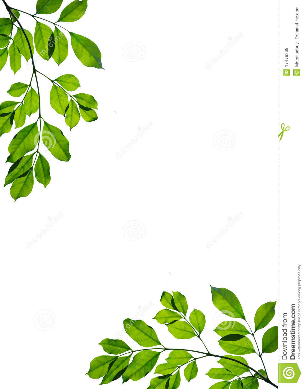 green leaf frame isolated royalty free stock images image 17479369