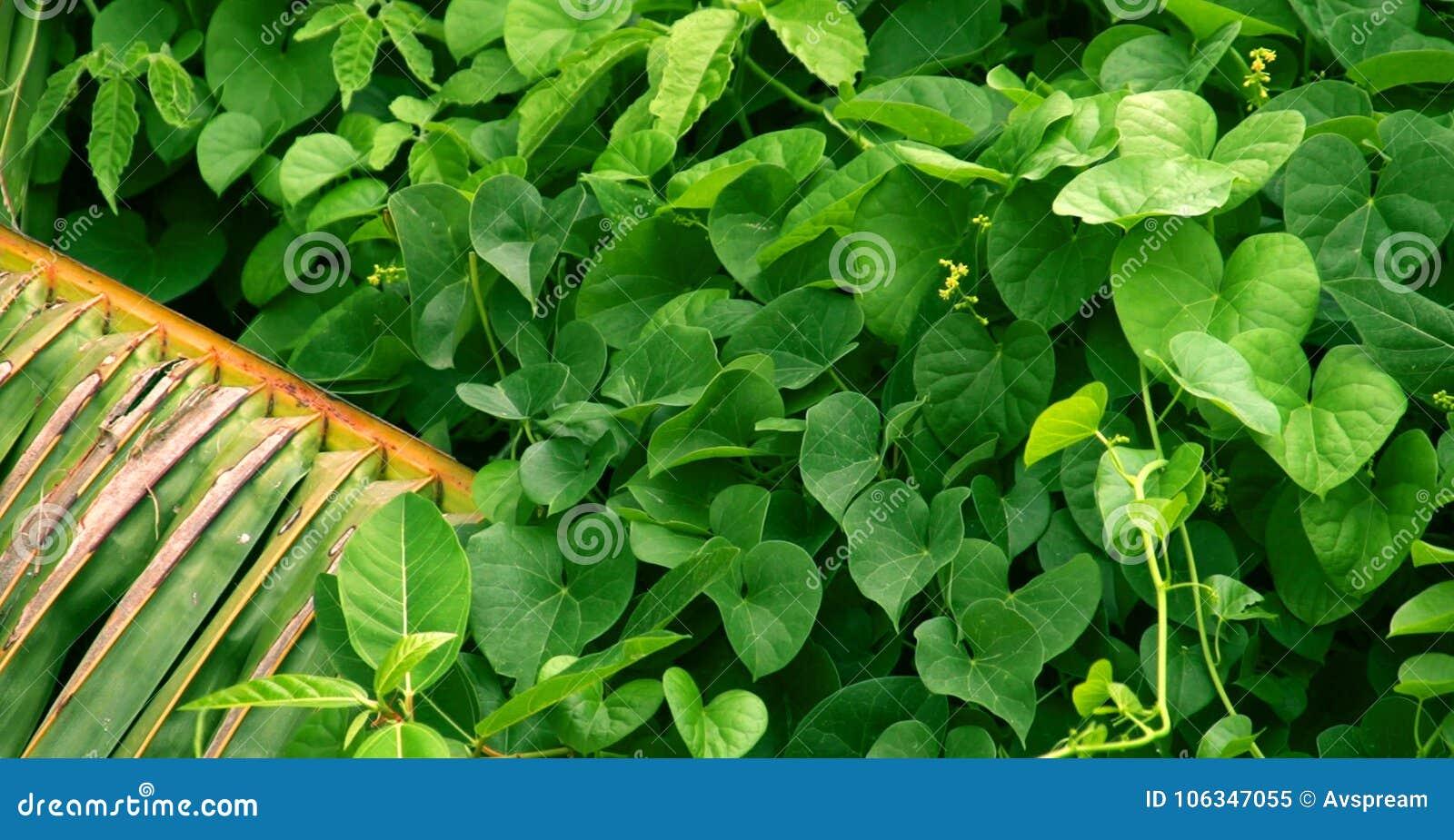 Green leaf, Green Leaves background, palm tree