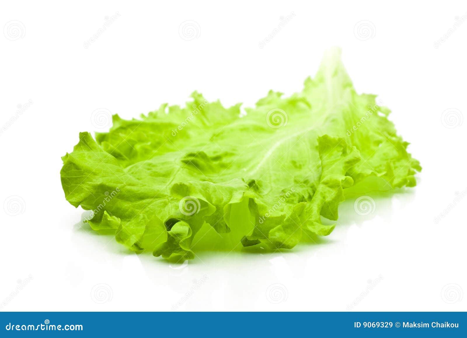 green leaf lettuce stock image image of salad vegetable 9069329