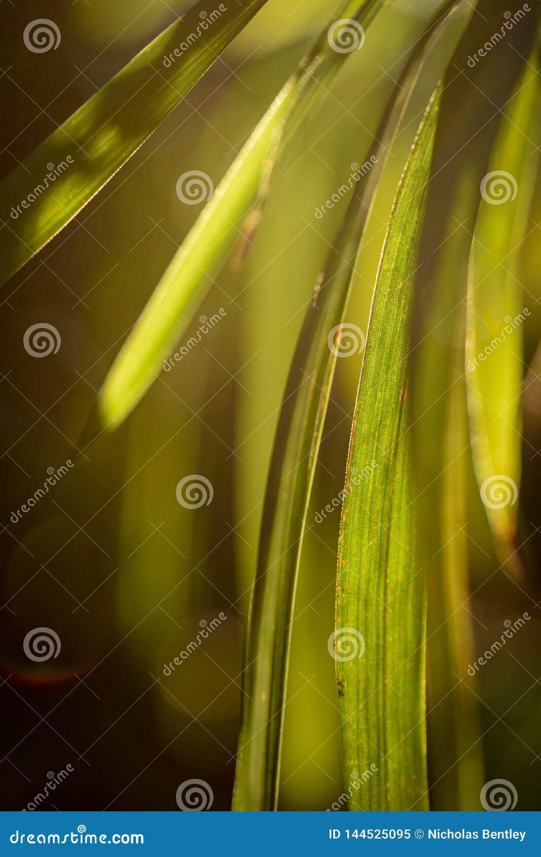 Green Leaf Light, Warm Autumn Sun