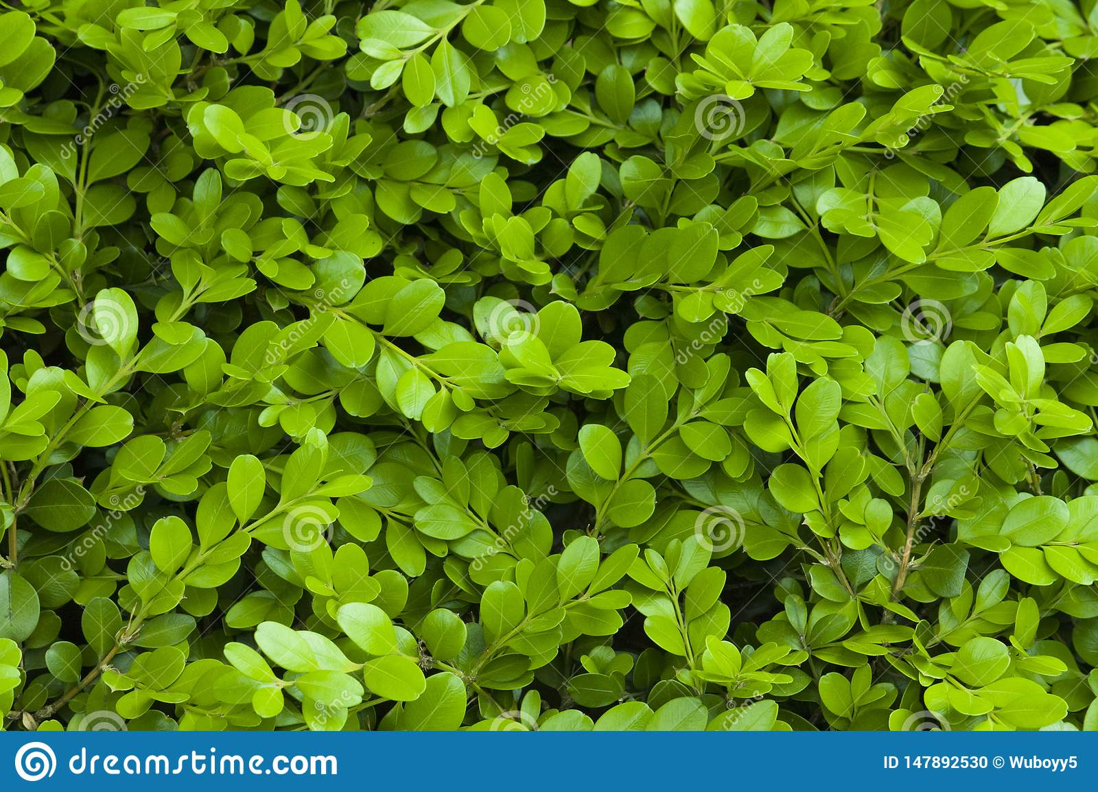 Green leaf material, texture ,background