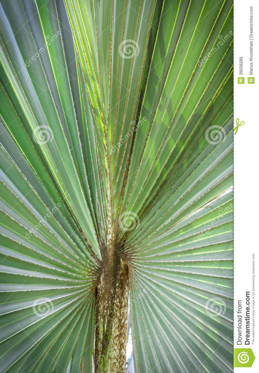 Green leaf palm tree