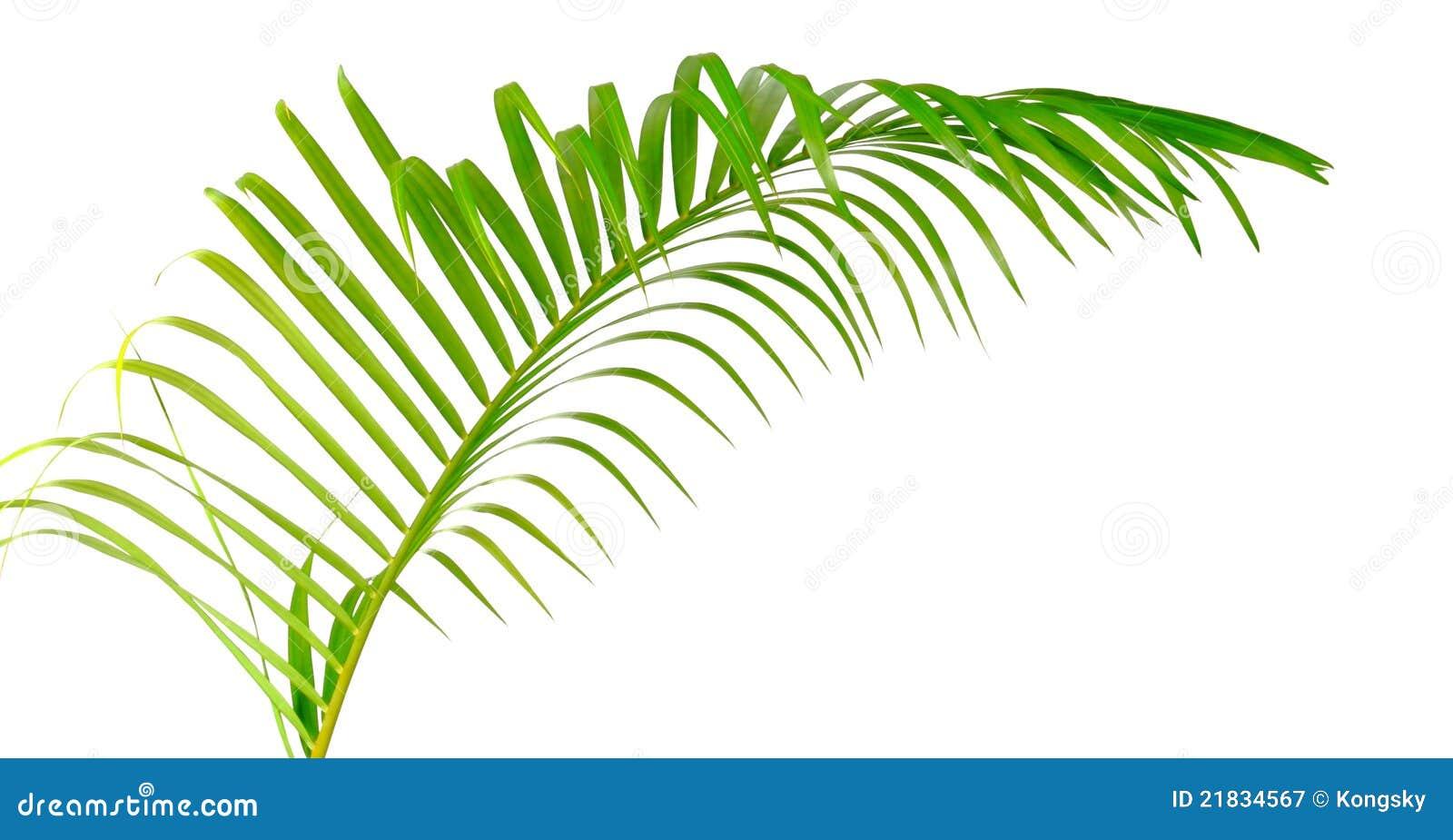 Palm Tree Leaves Clipart Printable Palm Tree Leaf