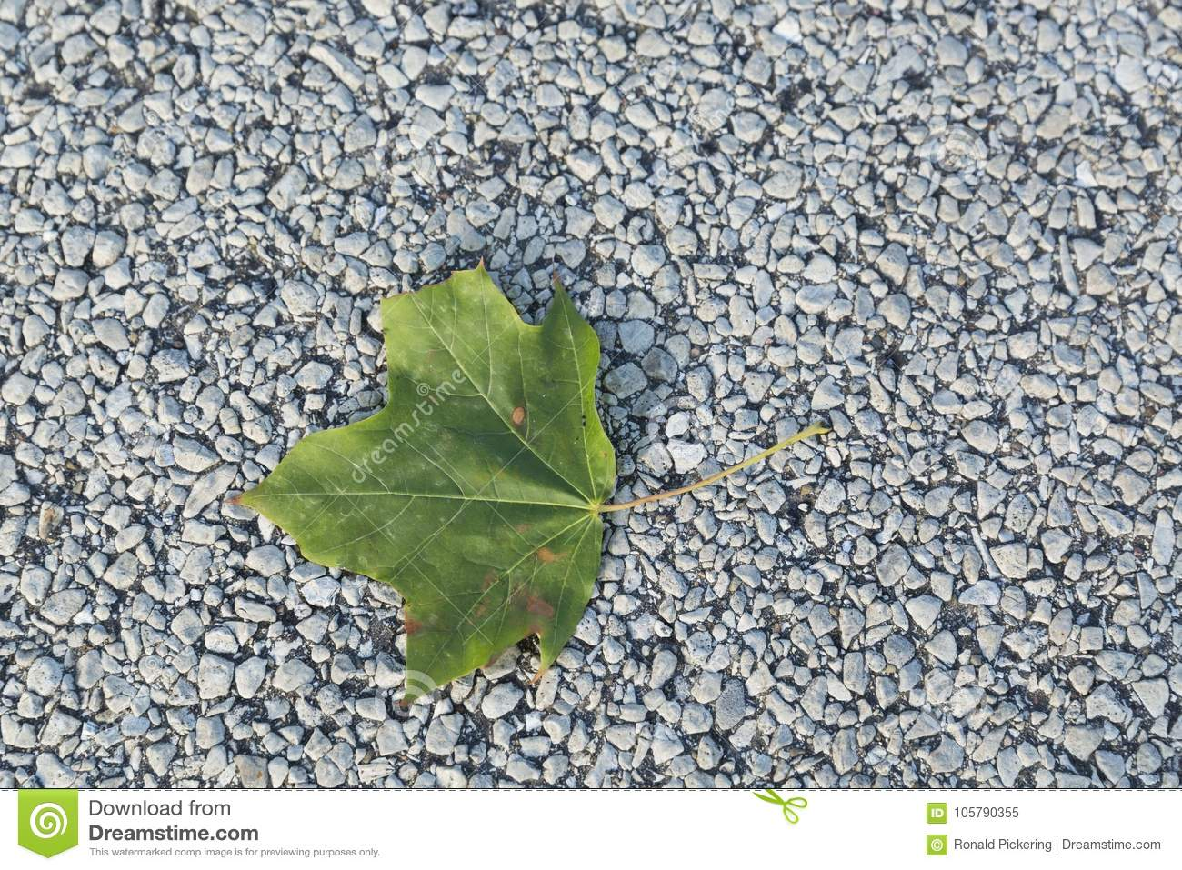 Single Green Leaf of Summer on Pavement