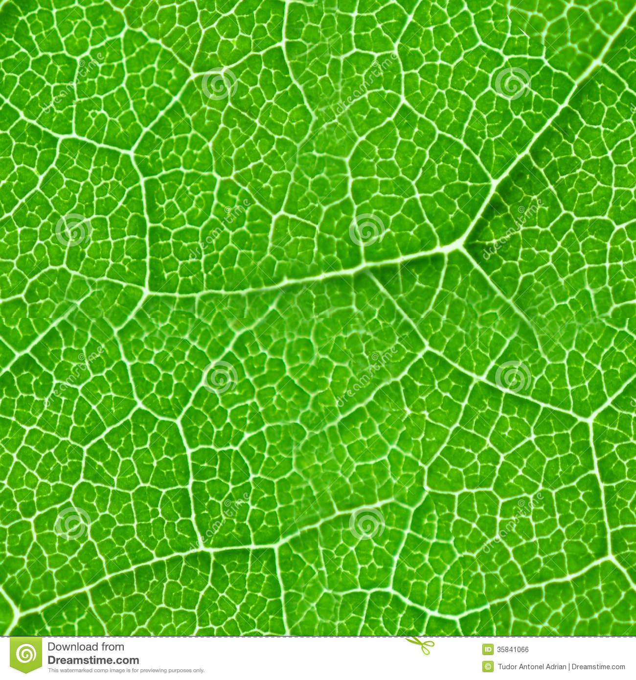Green Leaf Seamless Texture Stock Photo Image Of Texture