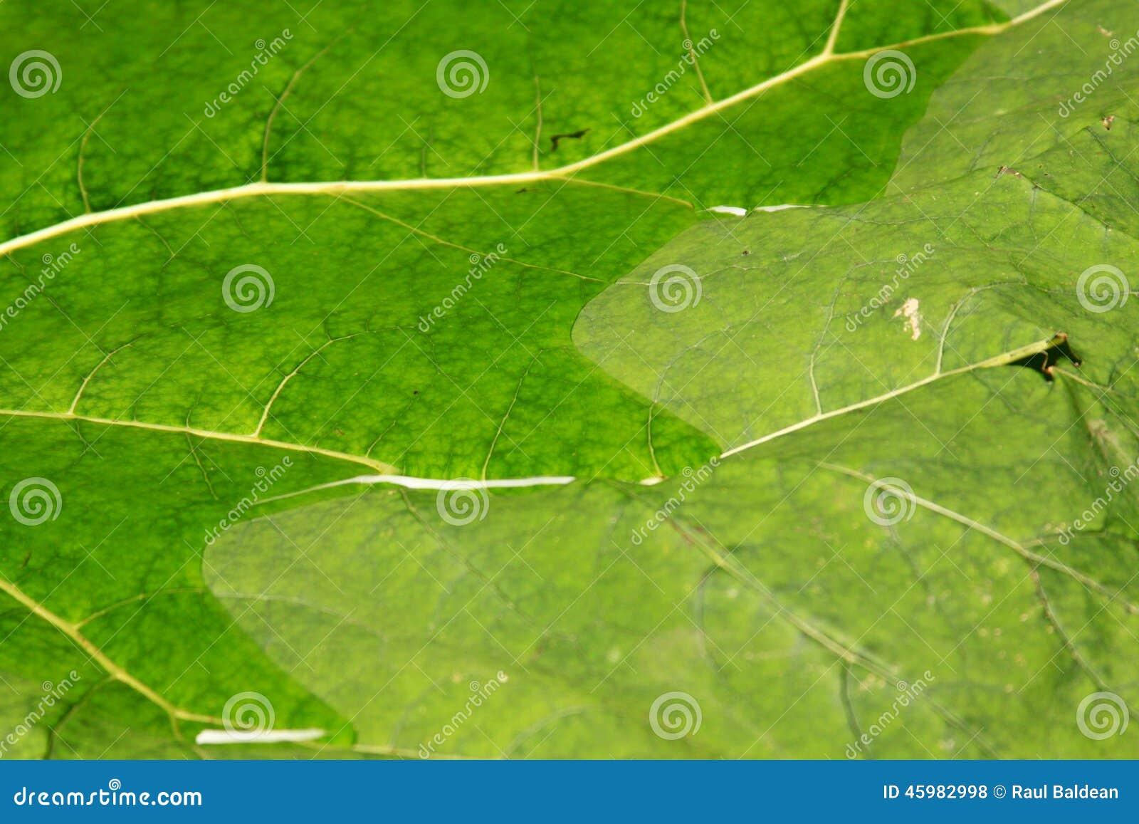 Green leaf texture background 02