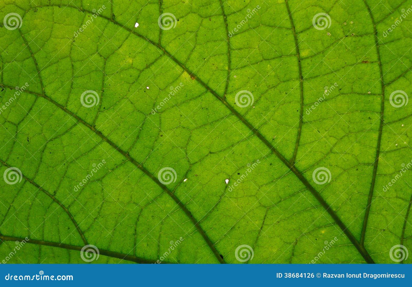 green leaf royalty free stock image image 38684126. Black Bedroom Furniture Sets. Home Design Ideas