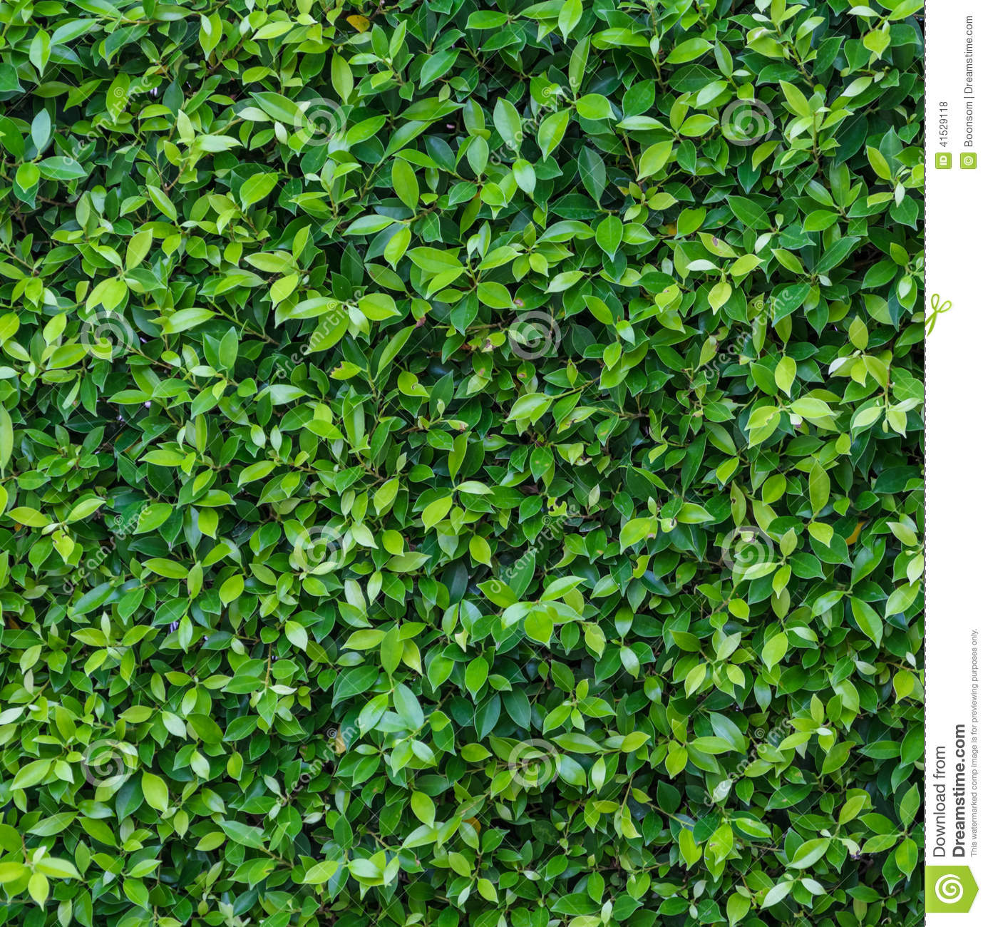 Green Leaf Wall Stock Photo Image 41529118