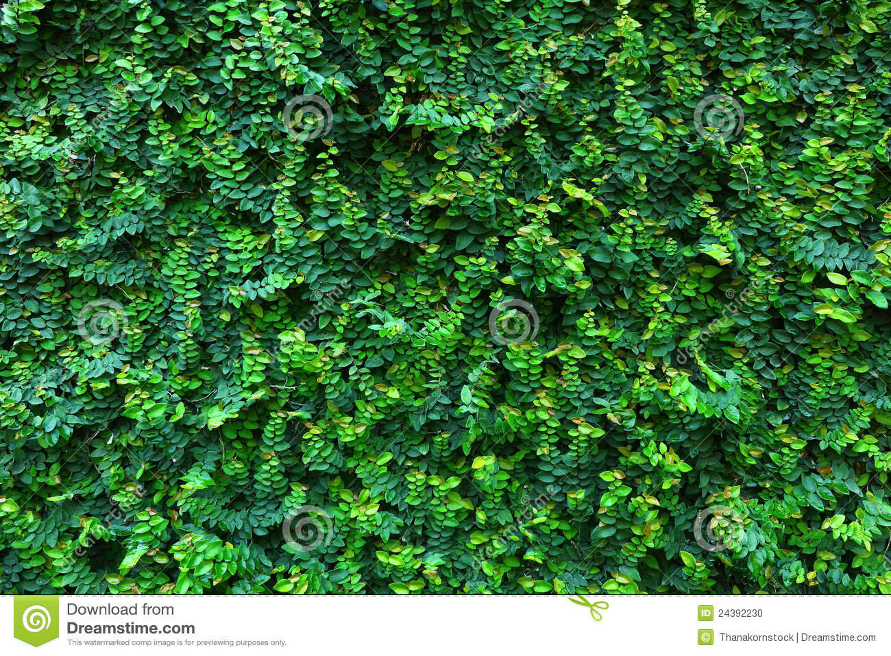 Green Leaf Wall Backgrounds Stock Photo Image Of Image