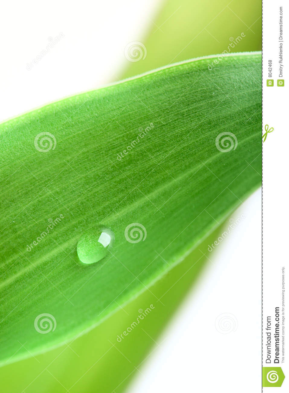 Green leaf with water droplet