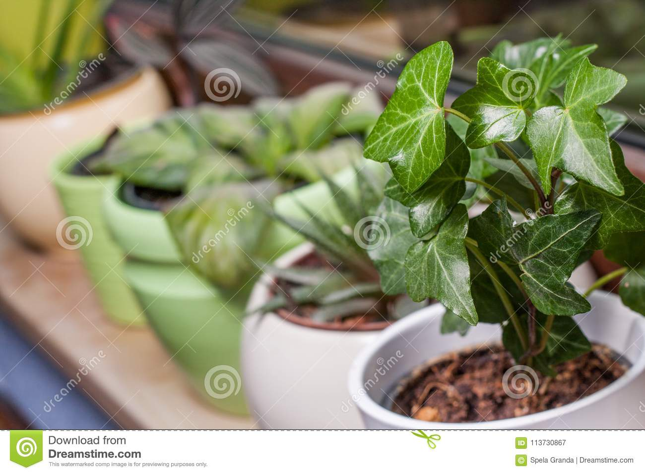 Green Potted Plants On A Window Sill Stock Image - Image of indoors ...